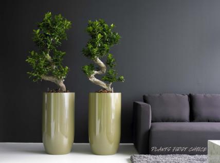 b robegr nung hydrokultur eisen b ro und objektbegr nung. Black Bedroom Furniture Sets. Home Design Ideas
